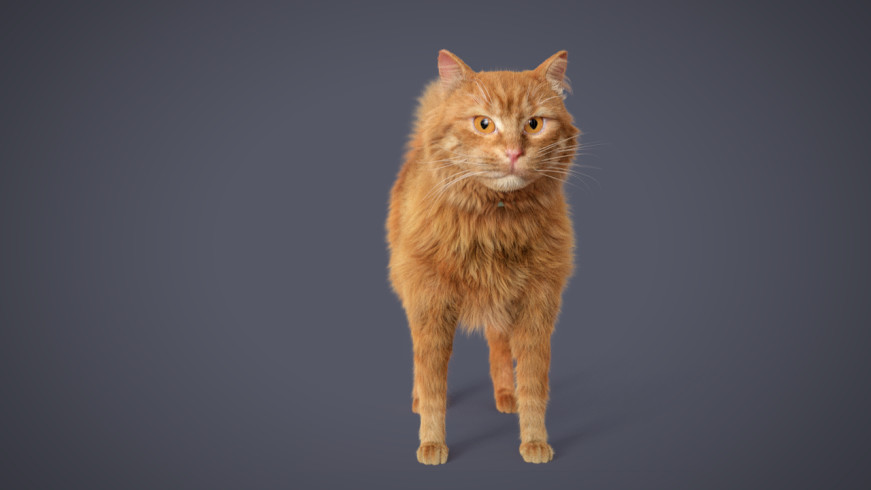 Cat_05